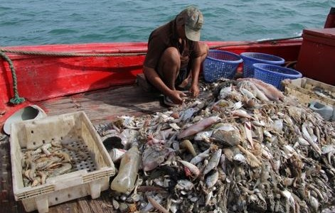 The Dark Truth Behind the Seafood We Consume