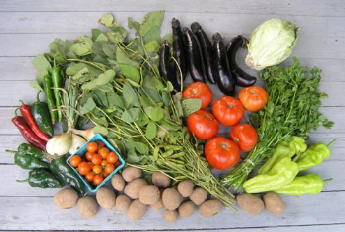 Food for Thought: Being Vegetarian