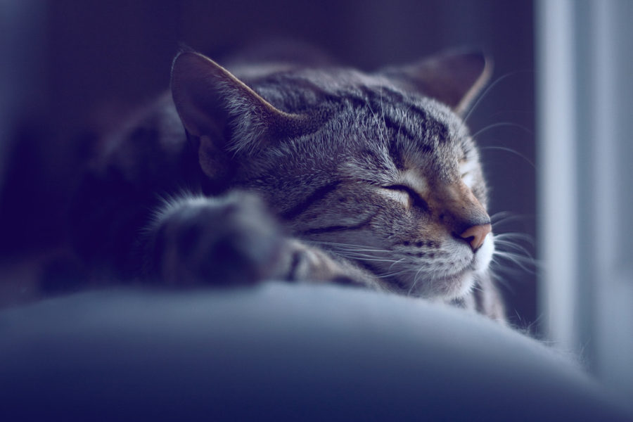 %22Sleeping+Cat%22+by+Michael+Carian+is+licensed+under+CC+BY-SA+2.0